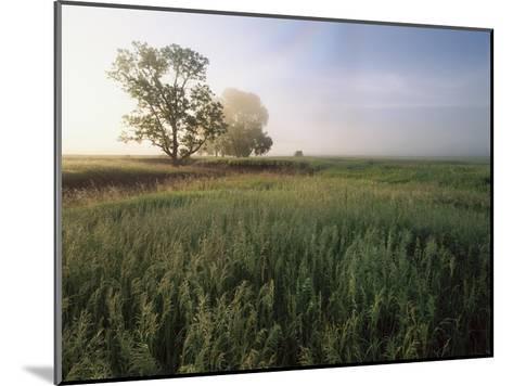 Oak trees shrouded in fog, Flint Hills, Kansas-Tim Fitzharris-Mounted Art Print