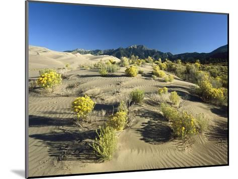 Flowering Shrubs, Sangre de Cristo Mountains, Great Sand Dunes National Monument, Colorado-Tim Fitzharris-Mounted Art Print