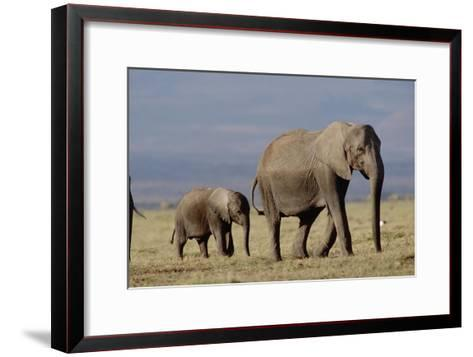 African Elephant mother and calf, Kenya-Tim Fitzharris-Framed Art Print