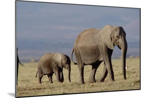 African Elephant mother and calf, Kenya-Tim Fitzharris-Mounted Art Print