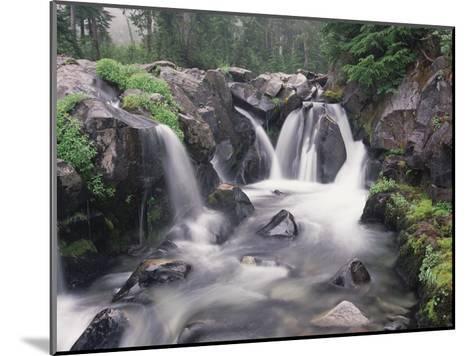 Paradise River cascade, Mt Rainier National Park, Washington-Tim Fitzharris-Mounted Art Print