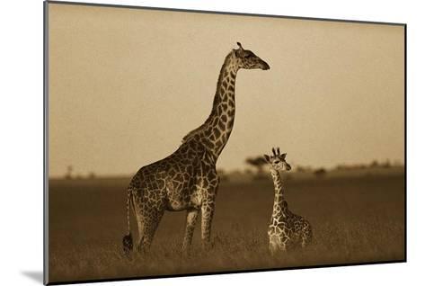 Giraffe adult and foal on savanna, Kenya - Sepia-Tim Fitzharris-Mounted Art Print