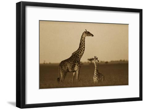 Giraffe adult and foal on savanna, Kenya - Sepia-Tim Fitzharris-Framed Art Print
