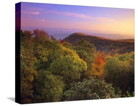 Blue Ridge Mountains with deciduous forests in autumn, North Carolina-Tim Fitzharris-Stretched Canvas Print