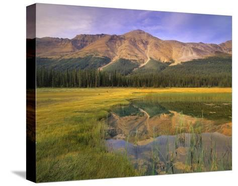 Observation Peak and coniferous forest reflected in pond, Banff National Park, Alberta-Tim Fitzharris-Stretched Canvas Print