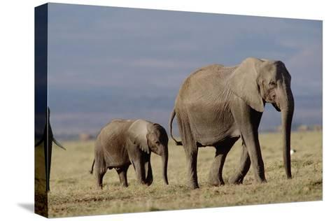 African Elephant mother and calf, Kenya-Tim Fitzharris-Stretched Canvas Print