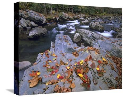 Little Pigeon River, Great Smoky Mountains National Park, Tennessee-Tim Fitzharris-Stretched Canvas Print