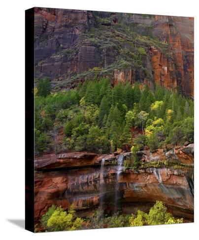 Cascades at Emerald Pools, Zion National Park, Utah-Tim Fitzharris-Stretched Canvas Print