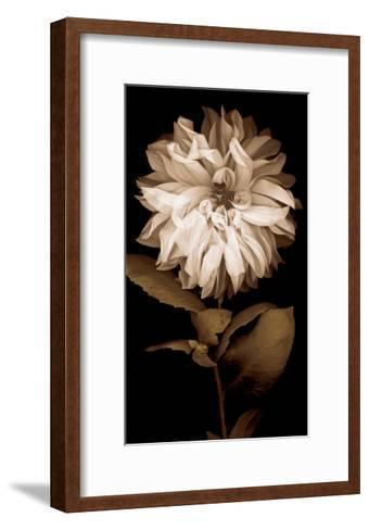 Dahlia I-Caroline Kelly-Framed Art Print