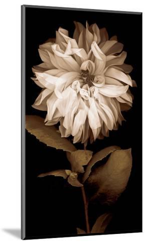 Dahlia I-Caroline Kelly-Mounted Giclee Print