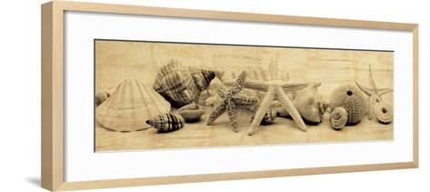 Treasures II-John Seba-Framed Art Print