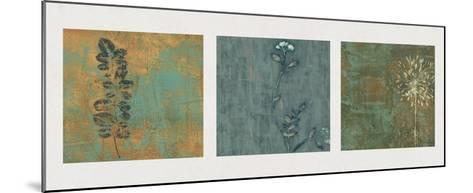 Nature Path-Chris Donovan-Mounted Giclee Print