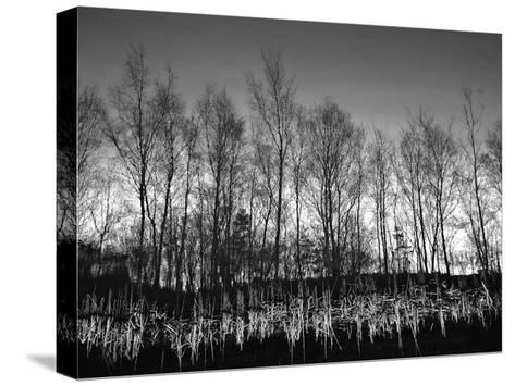 Watery Reflection-Martin Henson-Stretched Canvas Print