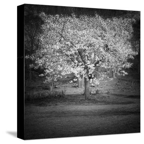 Woodland Tones II-Martin Henson-Stretched Canvas Print