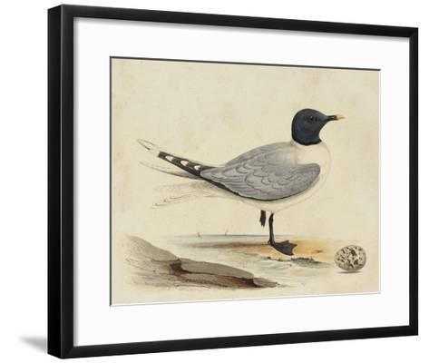 Meyer Shorebirds I-H^ l^ Meyer-Framed Art Print