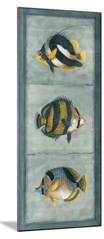 Tropical Fish Trio II--Mounted Giclee Print