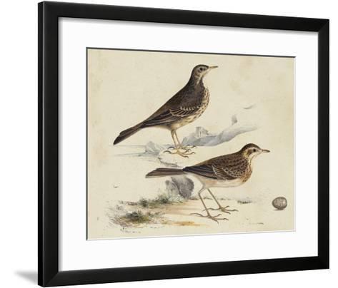 Meyer Shorebirds VI-H^ l^ Meyer-Framed Art Print