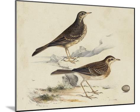 Meyer Shorebirds VI-H^ l^ Meyer-Mounted Giclee Print