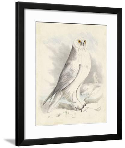 Meyer Snowy Owl-H^ l^ Meyer-Framed Art Print