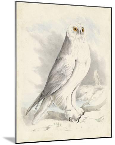 Meyer Snowy Owl-H^ l^ Meyer-Mounted Giclee Print