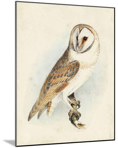 Meyer Barn Owl-H^ l^ Meyer-Mounted Giclee Print