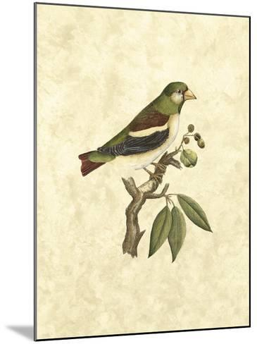 Selby Birds V-John Selby-Mounted Giclee Print