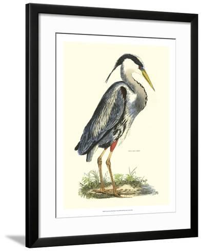 Great Blue Heron-John Selby-Framed Art Print