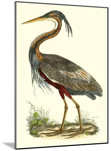 Purple Heron-John Selby-Mounted Giclee Print