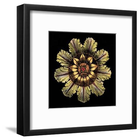 Rosette on Black IV-DaCarlo Antonini-Framed Art Print