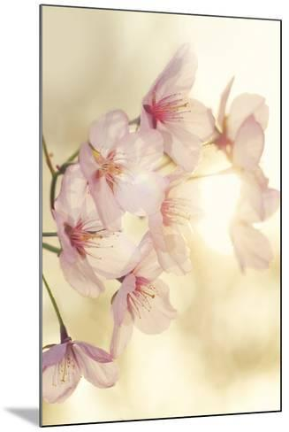 Blossom-Andreas Stridsberg-Mounted Giclee Print