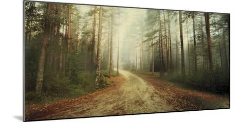Misty Trail-Andreas Stridsberg-Mounted Giclee Print