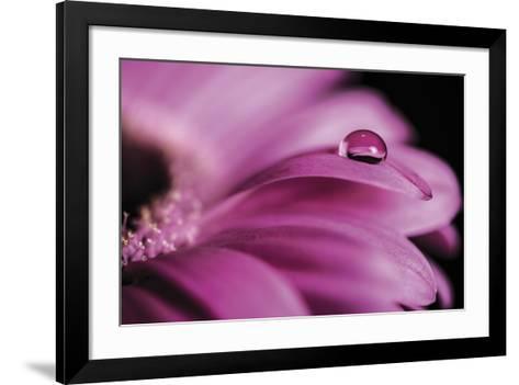 Dew Drops-Andreas Stridsberg-Framed Art Print