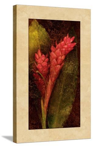 Ginger-John Seba-Stretched Canvas Print