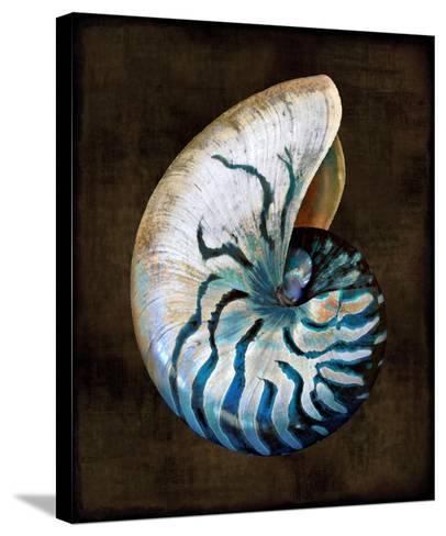 Ocean Treasure IV-Caroline Kelly-Stretched Canvas Print