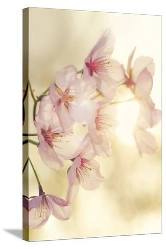 Blossom-Andreas Stridsberg-Stretched Canvas Print