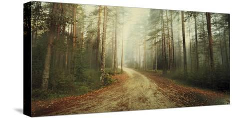 Misty Trail-Andreas Stridsberg-Stretched Canvas Print