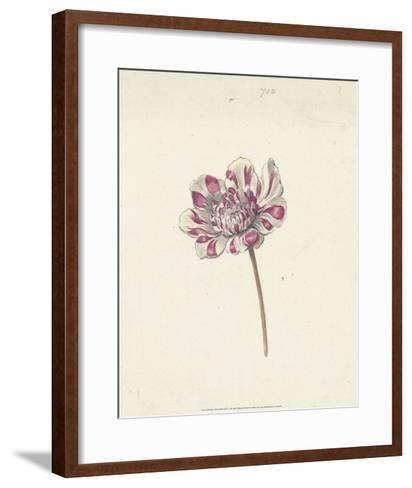 Red and White Flower, c. 1600-1699-Anna Cornelia Moda-Framed Art Print
