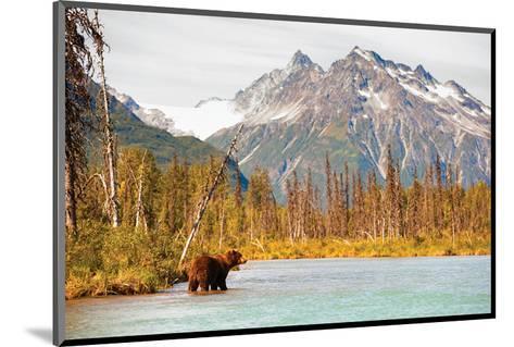 Natural Splendors Alaska IV--Mounted Art Print