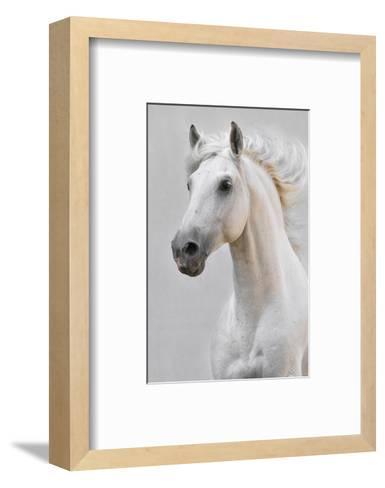 White Horse Stallion--Framed Art Print