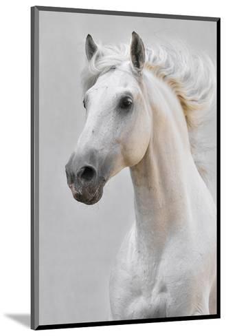 White Horse Stallion--Mounted Art Print