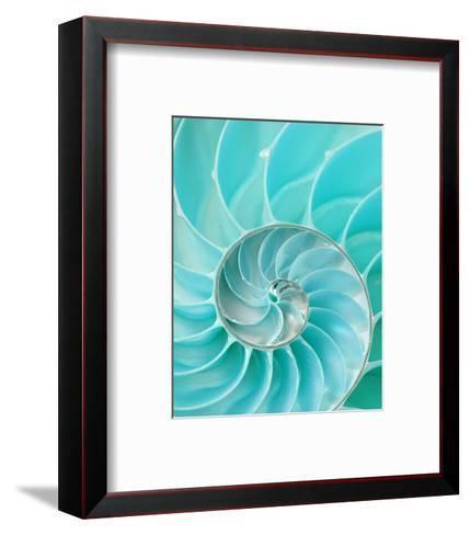 Nautilus Shell II--Framed Art Print