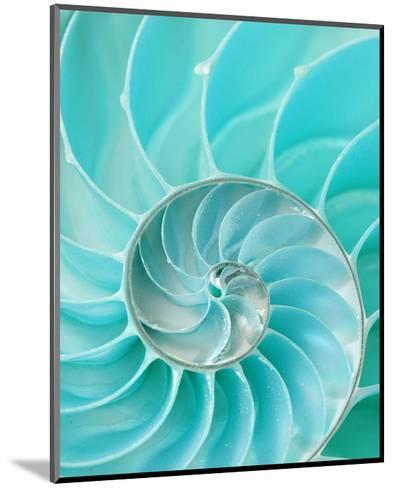 Nautilus Shell II--Mounted Art Print