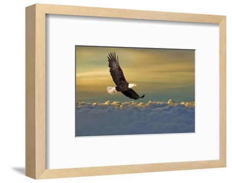 Bald Eagle Flying Above Clouds--Framed Art Print