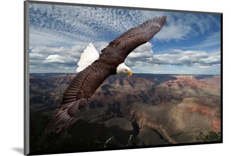 American Bald Eagle Mountains--Mounted Art Print