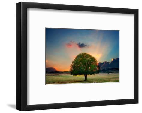Lone Tree in Cloud Sunset--Framed Art Print