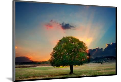 Lone Tree in Cloud Sunset--Mounted Art Print