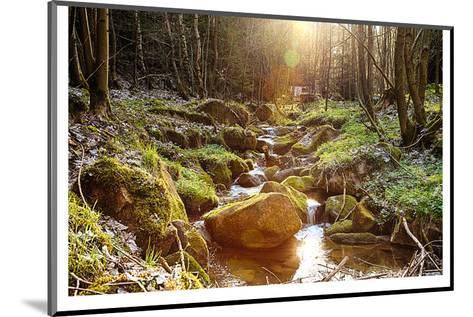 River Boulders Primeval Forest--Mounted Art Print