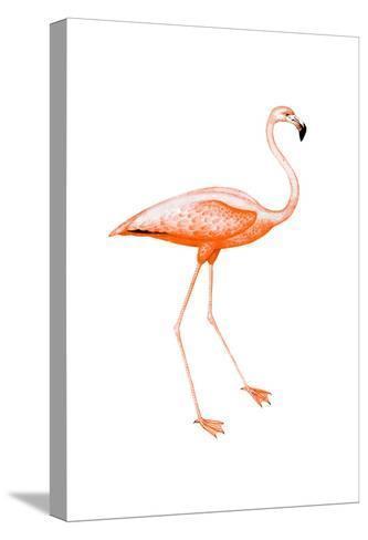 Orange Flamingo 2-Sheldon Lewis-Stretched Canvas Print