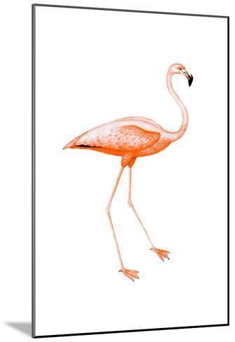 Orange Flamingo 2-Sheldon Lewis-Mounted Art Print