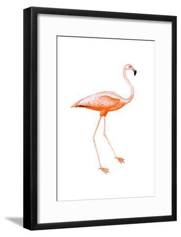 Orange Flamingo 2-Sheldon Lewis-Framed Art Print